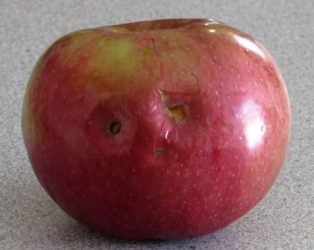 Photo of apple with holes that resemble rueful face