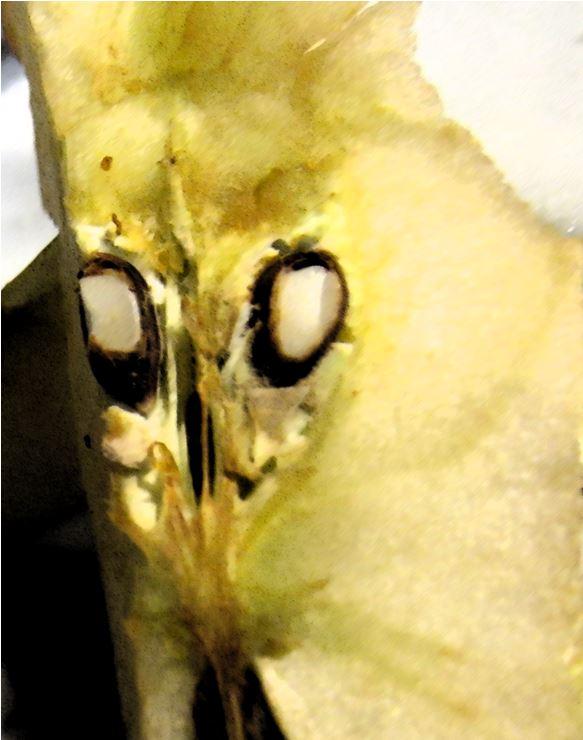 Digitalized photo of apple core