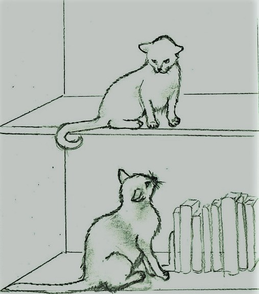 Pencil drawing of cats on bookshelves