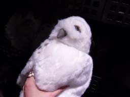 And I really wanted to have this adorable owl