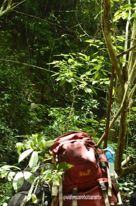 TN Alas Purwo, Banyuwangi, Jawa Timur, Mapala UI, Pencinta Alam, Traveling, Adventure, Traveler, Adventurer, Karst, Hutan Tertua di Jawa, Plengkung, Visit Jawa Timur, Visit Banyuwangi, Alas Purwo National Park, Perjalanan Panjang, BKP 13, Pantai Ngente