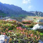 maramures-parc-national-monts-rodna-nature