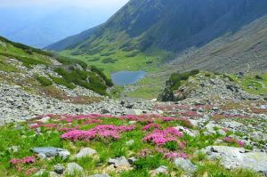 maramures-parc-national-monts-rodna-randonnée-nature