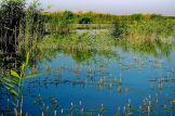 safari-photos-delta-du-danube