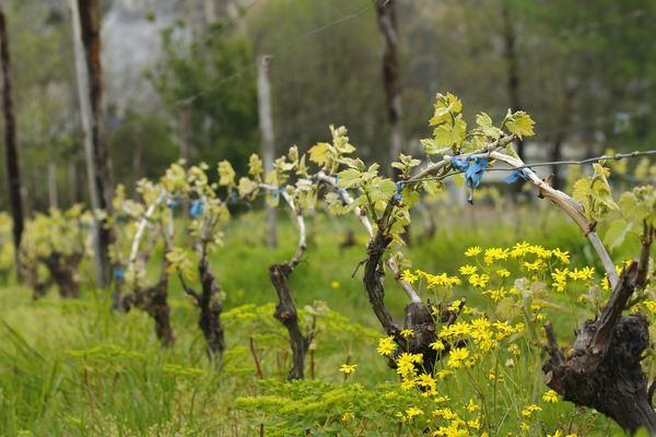 visite-domaine-viticole-macedoine