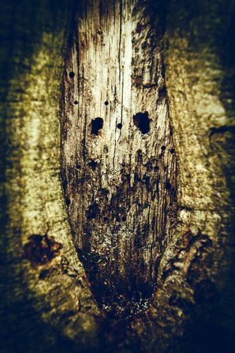 Le monstre tapis dans l'ombre de la nature à l'automne dans les bois