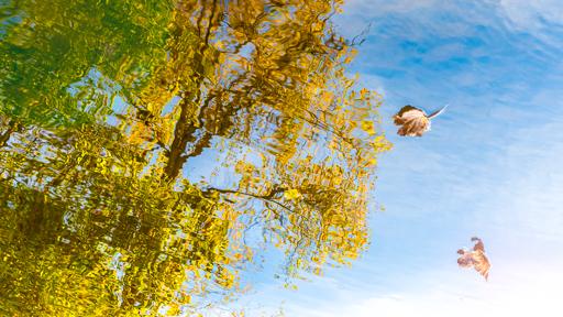 Évocation originale de l'automne dans le reflet de l'eau