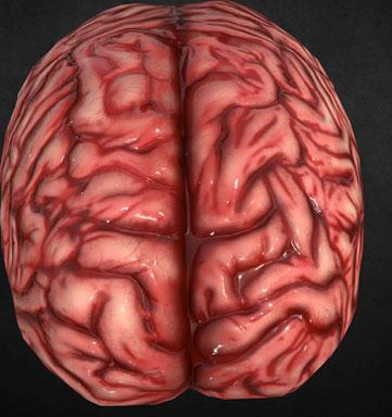 Image de base d'un cerveau issue d'un objet en 3D de Internet