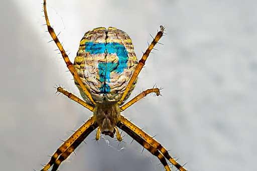 Illustration de l'article à propos de l'outil créatif SPIDER