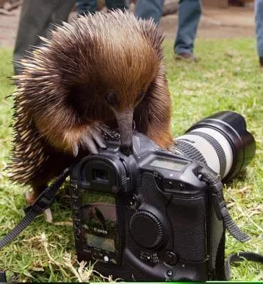 hedgehog experimenting with the camera