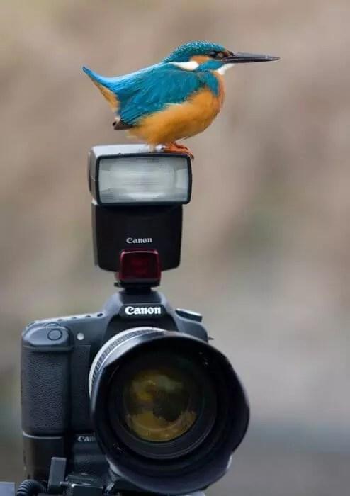 Bird on a flash