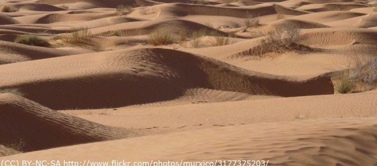 Beauty of the desert (CC) BY-NC-SA murxico