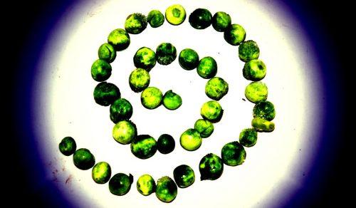 green peas arranged in a spiral