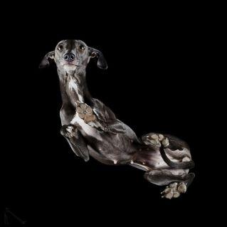 18-Under-dogs-58ec83df74642__880