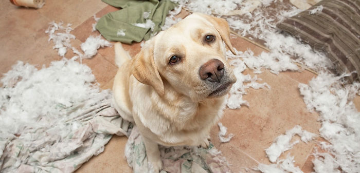 dog-care_common-dog-behavior-problems_overcoming-separation-anxiety_main-image-58e7661294f78__700