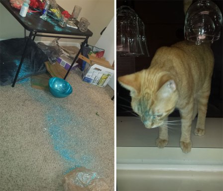 share-the-mess-your-pets-made-when-you-left-them-alone-114-58ec9bd62f65d__700