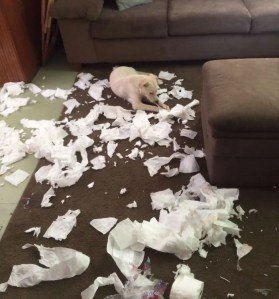 share-the-mess-your-pets-made-when-you-left-them-alone-133-58ef1bdd4599b__700
