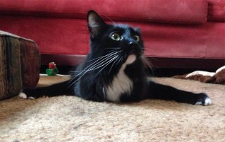 hey-pandas-share-pics-of-your-cat-acting-weird-141-593549bd9a169__700