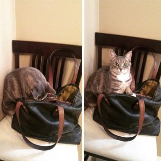 thief-cat-1-5950c9c4eb556__605