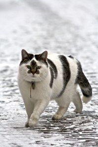 animals-with-unusual-fur-markings-37-59afafb6745ff__605