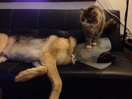 cats-dogs-not-getting-along-hate-living-together-1-59b10d56c70c2__605