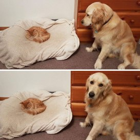 cats-dogs-not-getting-along-hate-living-together-2-59b10d1493b69__605