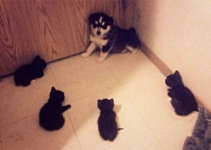 cats-dogs-not-getting-along-hate-living-together-34-59b2458c5aa23__605