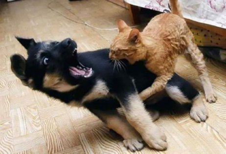 cats-dogs-not-getting-along-hate-living-together-35-59b247a24e614__605