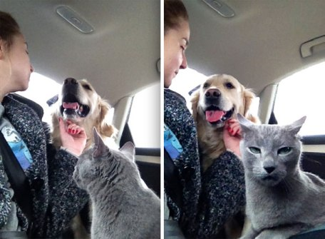 cats-dogs-not-getting-along-hate-living-together-39-59b257a554e7a__605