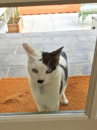 cats-with-unusual-fur-markings-47-59b8d4c32b919__605