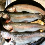 Smoked Trout And A Clear Head: Getting Away From It All