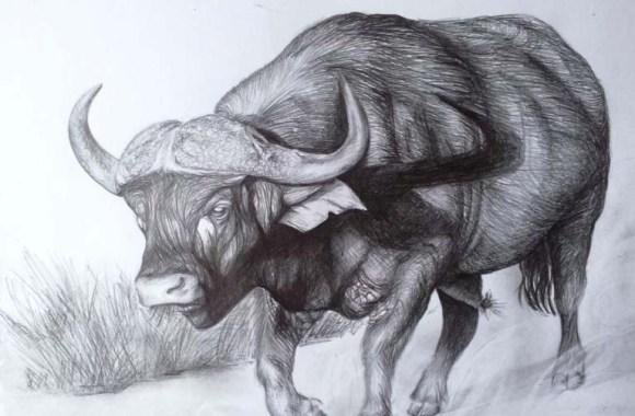 Buffalo Sketch