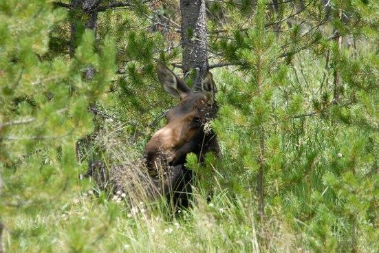 Moose No. 2