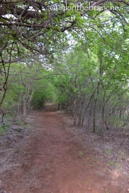 Black Kettle Creek Trail