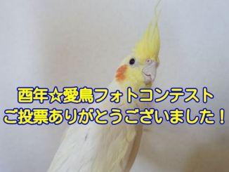 酉年☆愛鳥フォトコンテストの結果発表
