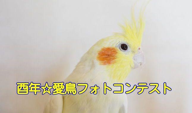 酉年☆愛鳥フォトコンテスト