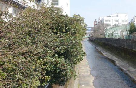 東京富士大学の間を流れる神田川