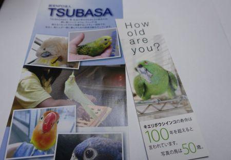 認定NPO法人TSUBASAとはー飼い鳥のレスキュー団体