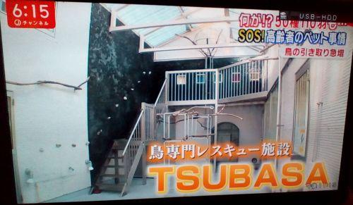スーパーJチャンネルで認定NPO法人TSUBASAのとり村が紹介