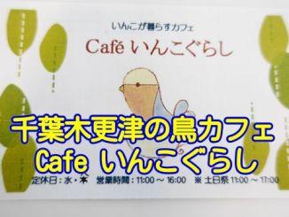 千葉県木更津市の鳥カフェ「Cafeいんこぐらし」