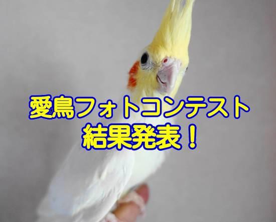 愛鳥フォトコンテスト結果発表