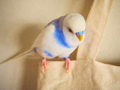 ネイルやマニキュアは鳥にとっても危険