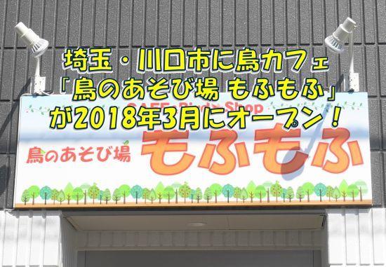 埼玉・川口(JR蕨駅)に新しい鳥カフェ「鳥の遊び場もふもふ」がオープン!
