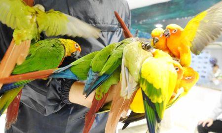 鳥のいるカフェ浅草のコガネメキシコインコ・ウロコインコとの触れ合い