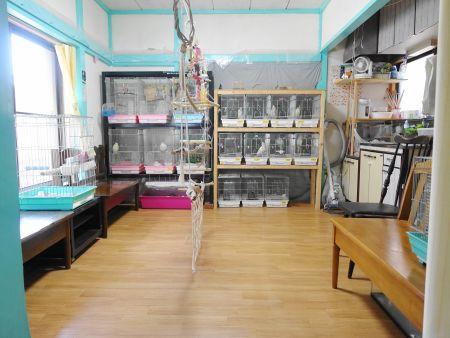 ことりのおうちの鳥部屋2・小型~中型インコ中心