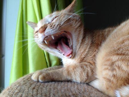 猫が持つパスツレラ菌は鳥にとても危険
