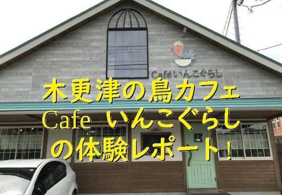 千葉県・木更津の鳥カフェ「Cafeいんこぐらし」体験レポート