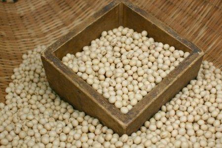 インコに生豆は有毒!中毒症状を引き起こす原因と与える時の注意点