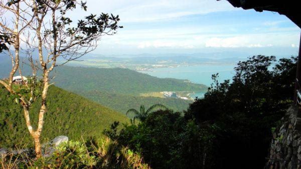 インコたちを絶滅から防ぐためには、生息地となる森林を保護する必要がある