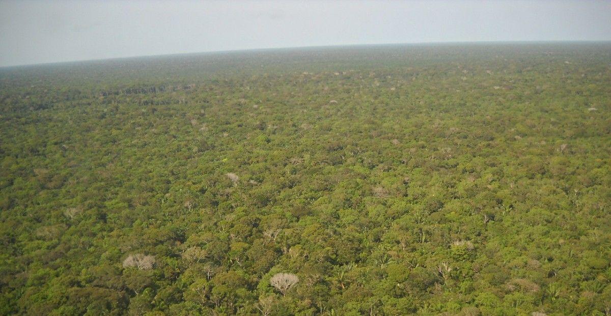 南アメリカ大陸のアマゾンの熱帯雨林